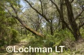 D'Entrecasteaux NP - trail to Lake Maringup AGD-588 ©Marie Lochman LT