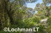 D'Entrecasteaux NP - trail to Lake Maringup AGD-589 ©Marie Lochman LT