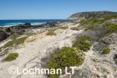 Fitzgerald River NP - West Beach AGD-741 ©Marie Lochman - Lochman LT