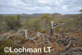 Helena-Aurora Range AGD-753 ©Marie Lochman - Lochman LT