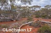Helena-Aurora Range AGD-754 ©Marie Lochman - Lochman LT