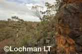 Helena-Aurora Range LLN-921 ©Jiri Lochman - Lochman LT