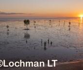Roebuck Bay AED-617  ©Marie Lochman- Lochman LT
