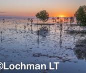 Roebuck Bay AGD-913 ©Marie Lochman - Lochman LT