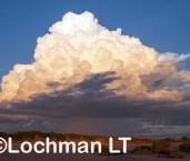 Roebuck Bay AGD-915 ©Marie Lochman - Lochman LT