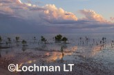 WA-Kimberely - Roebuck Bay in wet season ACD-622 ©Marie Lochman - Lochman LT