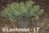 Short-beaked Echidna AHD-224 ©Marie Lochman - Lochman LT