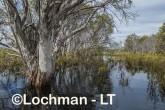 Lake Cronin NR - after rain AJD-285 ©Marie Lochman LT