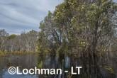 Lake Cronin NR - after rain AJD-286 ©Marie Lochman LT
