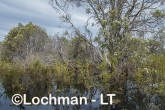 Lake Cronin NR - after rain AJD-287 ©Marie Lochman LT