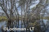 Lake Cronin NR - after rain AJD-288 ©Marie Lochman LT
