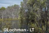 Lake Cronin NR - after rain AJD-289 ©Marie Lochman LT