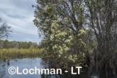 Lake Cronin NR - after rain AJD-290 ©Marie Lochman LT