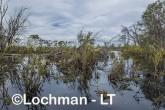 Lake Cronin NR - after rain AJD-291 ©Marie Lochman LT