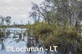 Lake Cronin NR - after rain AJD-292 ©Marie Lochman LT
