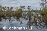 Lake Cronin NR - after rain AJD-293 ©Marie Lochman LT