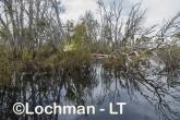 Lake Cronin NR - after rain AJD-295 ©Marie Lochman LT