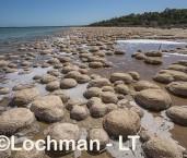 Yalgorup NP - Lake Clifton thrombolites LLW-196 ©Jiri Lochman - Lochman LT