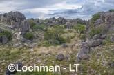 Kimberley - Oscar Range - Devonian Reef  AGD-939 ©Marie Lochman - Lochman LT