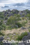 Kimberley - Oscar Range - Devonian Reef  AGD-941 ©Marie Lochman - Lochman LT