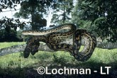 Morelia amethistina Amethystine Python HBY-581 ©Hans & Judy Beste- Lochman LT.