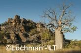 Oscar -Napier Range - Boab tree LLJ-755 © Jiri Lochman LT