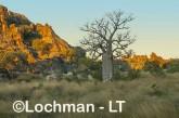 Oscar -Napier Range - Boab tree LLJ-760 © Jiri Lochman LT