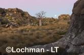 Oscar -Napier Range - Boab tree and moon LLJ-765 © Jiri Lochman LT