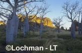 Oscar Range AMY-693 ©Marie Lochman - Lochman LT