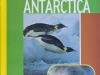 antarctica-web