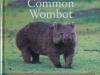 common-wombat-web