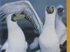 threatened-animals-web